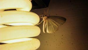 Vì sao ánh sáng đèn có thể thu hút côn trùng