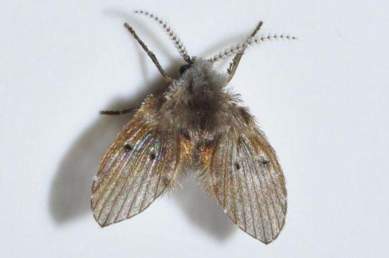 đèn diệt côn trùng tiêu diệt ruồi cánh bướm hiệu quả
